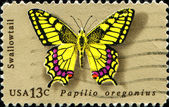 Swallowtail butterfly - papilio oregonius — Stock Photo
