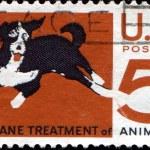 Humane treatment of animals — Stock Photo