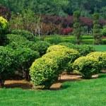 jardin — Photo #3084112