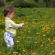Baby girl picking dandelion flowers on meadow — Stock Video #12592875
