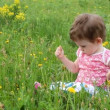 Baby girl picking dandelion flowers on meadow — Stock Video #12593119