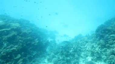 Fish among corals in Red Sea — Vídeo de Stock