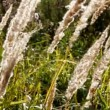Stock Video: Stems of dry grass