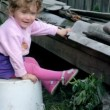 Stock Video: Little kid playing with puppies