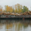 Stock Video: Barges loaded with wood on river