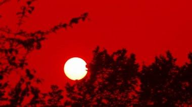 Time-lapse con puesta de sol sobre el bosque — Vídeo de Stock