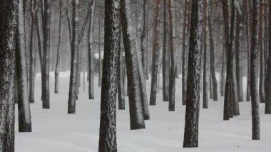 Sněžení v zimním lese — Stock video