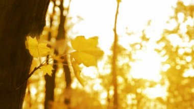 Yellow leaf on autumn trees in wind — Stock Video