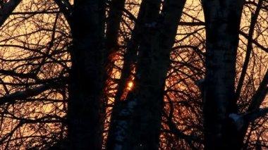 Soleil à travers les troncs d'arbres en hiver — Vidéo