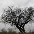 Dry tree under moody overcast sky — Stock Video #12686335