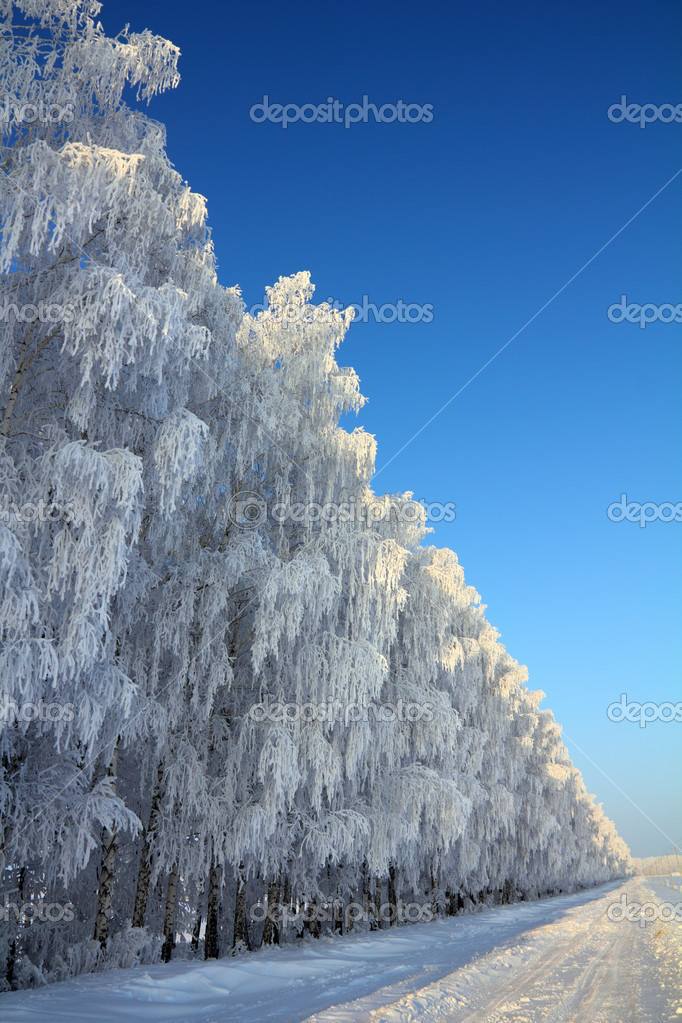 Landscape with winter road with birch wood — Stock Photo #13176994