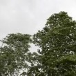 Trees in strong wind under storm sky — Stock Video