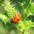 Ladybug on green grass macro — Stock Video