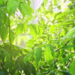 Green leaves under rain — Stock Video