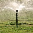 Stock Video: Sprinkler watering green lawn