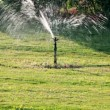 Sprinkler watering green lawn — Stock Video