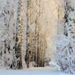 hiver gelé des bois de bouleaux dans la lumière du matin — Vidéo