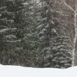 Snowfall in winter forest - timelapse - Stok fotoğraf
