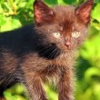 Stock Video: Little black kitten plaintively mew outdoor