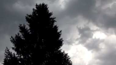 Jedle nahoře v silném větru pod nebem bouře — Stock video