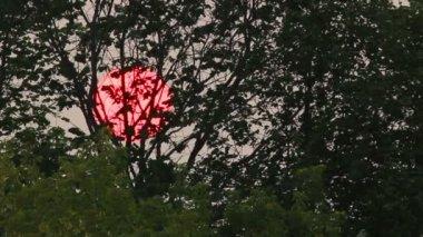 Timelapse mit Sonnenuntergang Sonne hinter Bäumen — Stockvideo