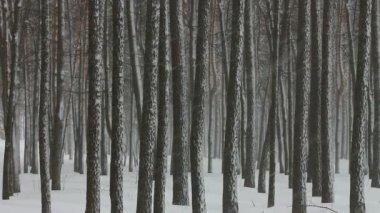 Nevadas en bosque de invierno — Vídeo de Stock