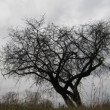 Dry tree under moody overcast sky — Stock Video #13299632