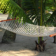 Hammock under palms — Stock Photo