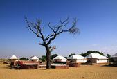 Namiot camp w pobliżu pustyni — Zdjęcie stockowe