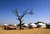 Stanový tábor poblíž poušť — Stock fotografie