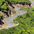 Winding road between tea plantations - Stock Photo