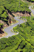 Winding road between tea plantations — Stock Photo