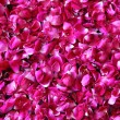 Red rose petals background — Stock Photo