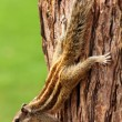Chipmunk sitting on tree - Stock Photo