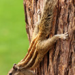 Stock Photo: Chipmunk sitting on tree