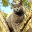 Wandering gray cat sitting on tree — Stock Photo