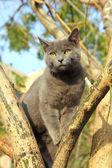Wandern graue katze, die sitzt auf baum — Stockfoto
