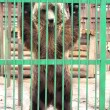 Captivity - brown bear in cage — Stock Photo