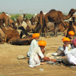 Stock Photo: Pushkar Camel Fair - sellers of camels during festival