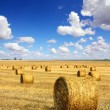 Harvested bales of straw in field — Stock Photo