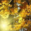 Autumn yellow leaves and sun — Stock Photo