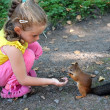 Little girl feeding squirrel with nuts — Stock Photo