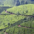 Mountain tea plantation in India — Foto Stock