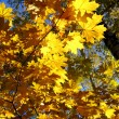 Autumn yellow leaves — Stockfoto