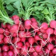 Many bunches of radish — Stock Photo