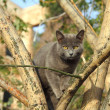 Gray cat sitting on tree — Stock Photo