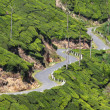 Winding road between tea plantations — Stockfoto