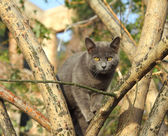 Gray cat sitting on tree — Zdjęcie stockowe