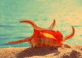 Orange seashell and sea - vintage retro style — Stock Photo
