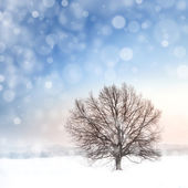 Winter bare tree and snowfall — Stock Photo